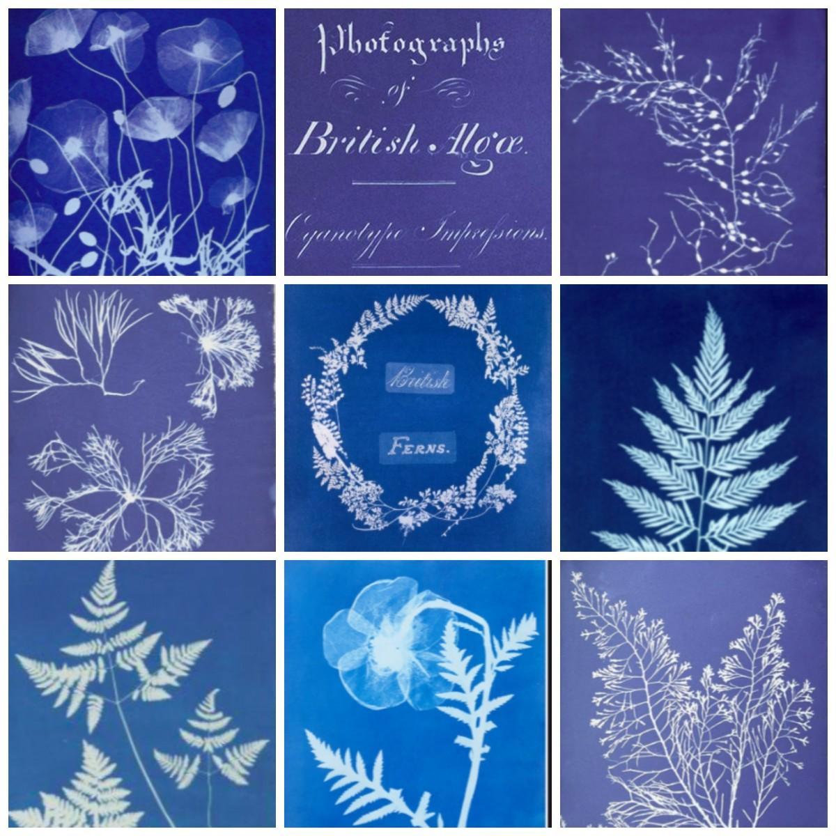 Anna Atkins collage