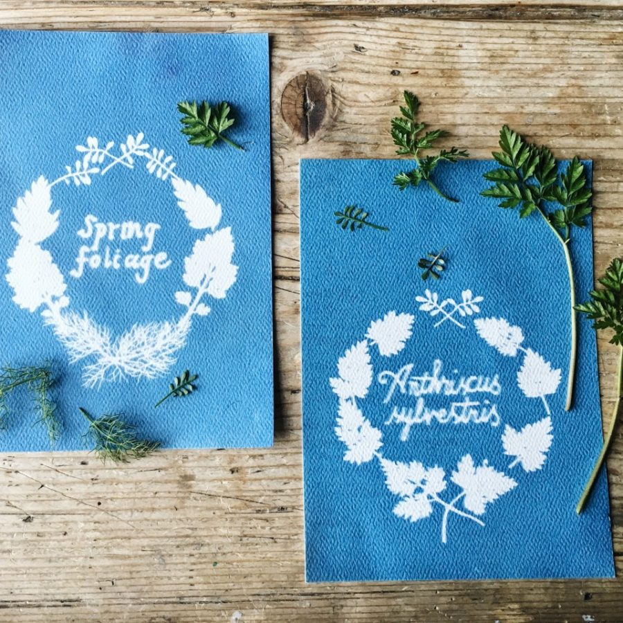How to take a cyanotype photograph