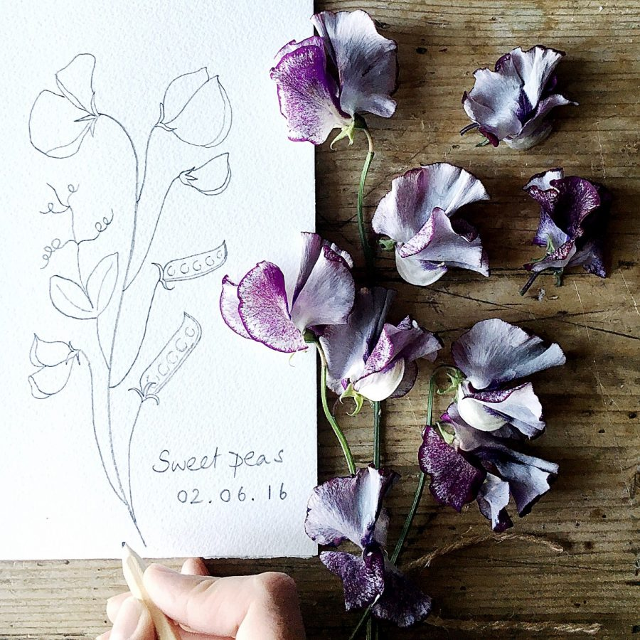 Sweetpeas-scent and memory